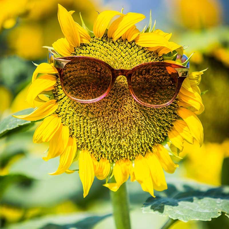 Seminare mit Pepp und Sonnenblumentaktik